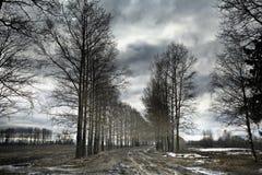 没有叶子的春天森林 免版税库存图片