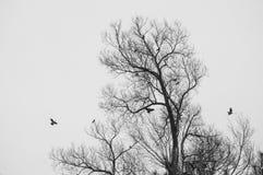 没有叶子的树剪影在飞行秋天的鸟近 图库摄影