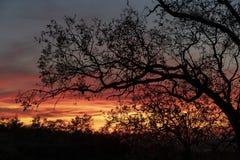 没有叶子的树反对光,在日落 免版税库存照片