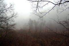 没有叶子的树在一处哀伤的有雾的风景 免版税库存照片