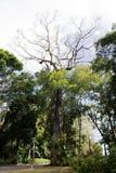 没有叶子的树在上面 免版税图库摄影