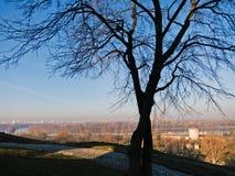 没有叶子的树在与多瑙河和萨瓦河的合流的一晴朗的秋天天在背景中在贝尔格莱德 免版税图库摄影