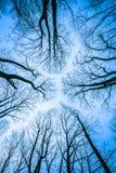 没有叶子的树在冬天季节期间 库存照片
