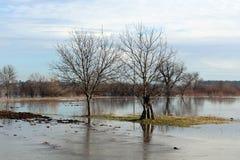 没有叶子的树在小海岛在洪水区域中部  库存照片
