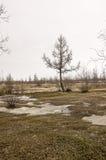 没有叶子的树在早期的春天 行军 免版税库存照片