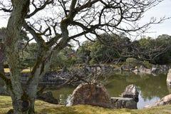 没有叶子的树在湖前面 库存照片