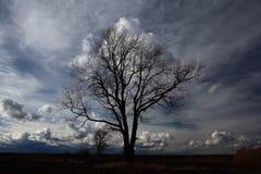 没有叶子的树在秋天领域 库存图片