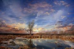 没有叶子的树在秋天领域 免版税库存图片