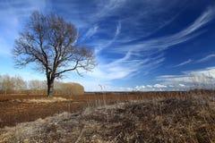 没有叶子的树在秋天领域 免版税库存照片