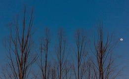 没有叶子的树在秋季期间, 免版税库存图片