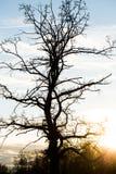 没有叶子的树在英国庭院里,多节的树 免版税库存图片