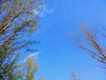 没有叶子的树枝在反对蓝天背景的春天 免版税库存照片