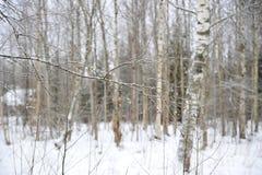没有叶子的树枝在多雪的冬天森林里 图库摄影