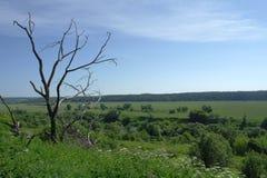 没有叶子的树以一个绿色风景为背景,夏天是俄罗斯的中间小条 免版税库存图片