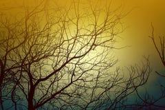 没有叶子的树从这些分支自然光和阴影被形成 免版税库存照片