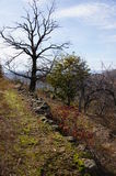 没有叶子的树 免版税库存图片