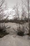 没有叶子的桦树在早期的春天 行军 免版税库存照片