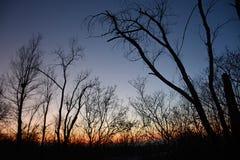 没有叶子的现出轮廓的树在暮色背景,颜色梯度中 库存图片