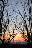 没有叶子的现出轮廓的树在暮色背景,颜色梯度中 图库摄影