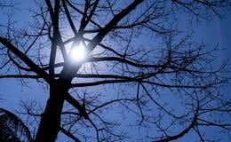 没有叶子的结构树 免版税库存图片
