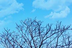 没有叶子的美好的树枝在反对蓝色多云天空背景的春天 库存照片