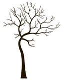 没有叶子的装饰树 库存照片
