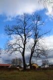 没有叶子的结构树 库存照片
