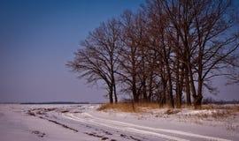 没有叶子的黑树在领域附近 库存照片