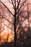没有叶子,刺,冷的冬天早晨的分支 免版税库存照片