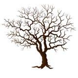 没有在白色隔绝的叶子的树 免版税库存照片