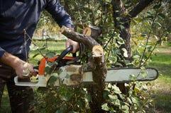 没有必要的保护的人,与锯的裁减树 图库摄影