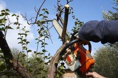 没有必要的保护的人,与锯的裁减树 免版税库存照片