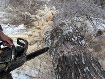 没有手套的男性运转的手在一冬天冷淡的天拿着在说谎在地面上的厚实的桦树的一个锯, 免版税图库摄影
