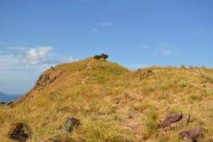 没有末端的灌木在Padar海岛 图库摄影