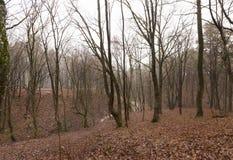 没有树的秋天森林 免版税库存照片
