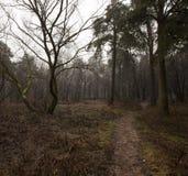 没有树的秋天森林 库存照片