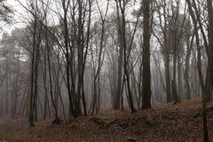 没有树的秋天森林 库存图片