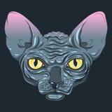 没有毛皮,与一种深灰颜色的狮身人面象,黄色眼睛的猫 皇族释放例证