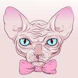 没有毛皮,无毛,狮身人面象桃红色弓的猫 免版税库存照片