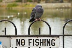 没有渔 免版税库存图片
