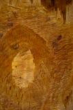 没有漆的破旧的木板 库存照片