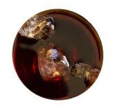 没有玻璃的查出的可乐饮料顶视图 库存照片