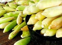 没有甜玉米,企业创造收入,包括农夫,与太阳光发光的背景 免版税库存照片