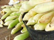 没有甜玉米,企业创造收入,包括农夫,与太阳光发光的背景 图库摄影