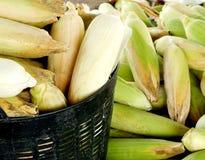没有甜玉米,企业创造收入,包括农夫,与太阳光发光的背景 免版税库存图片