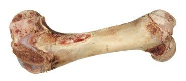 没有肉的骨头 库存照片