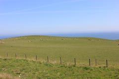 没有英国的草原 2 图库摄影