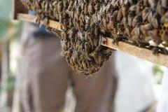 没有蜇的蜂 免版税库存照片