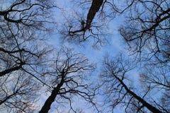 没有顶上的叶子的冬天光秃的树 免版税库存照片