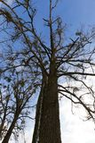 没有distvy的树 免版税库存照片